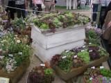 Osadené nádoby z výstavy Chelsea Londyn
