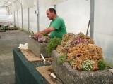 p.Vlasák - tvorba skaliek v nádobách