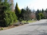 001 jarná záhrada