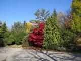 020 jeseň v záhrade